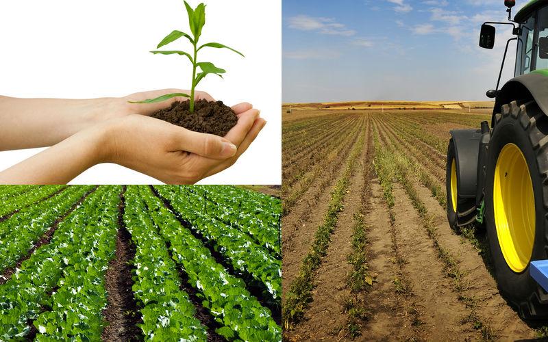 Agricola Sistema